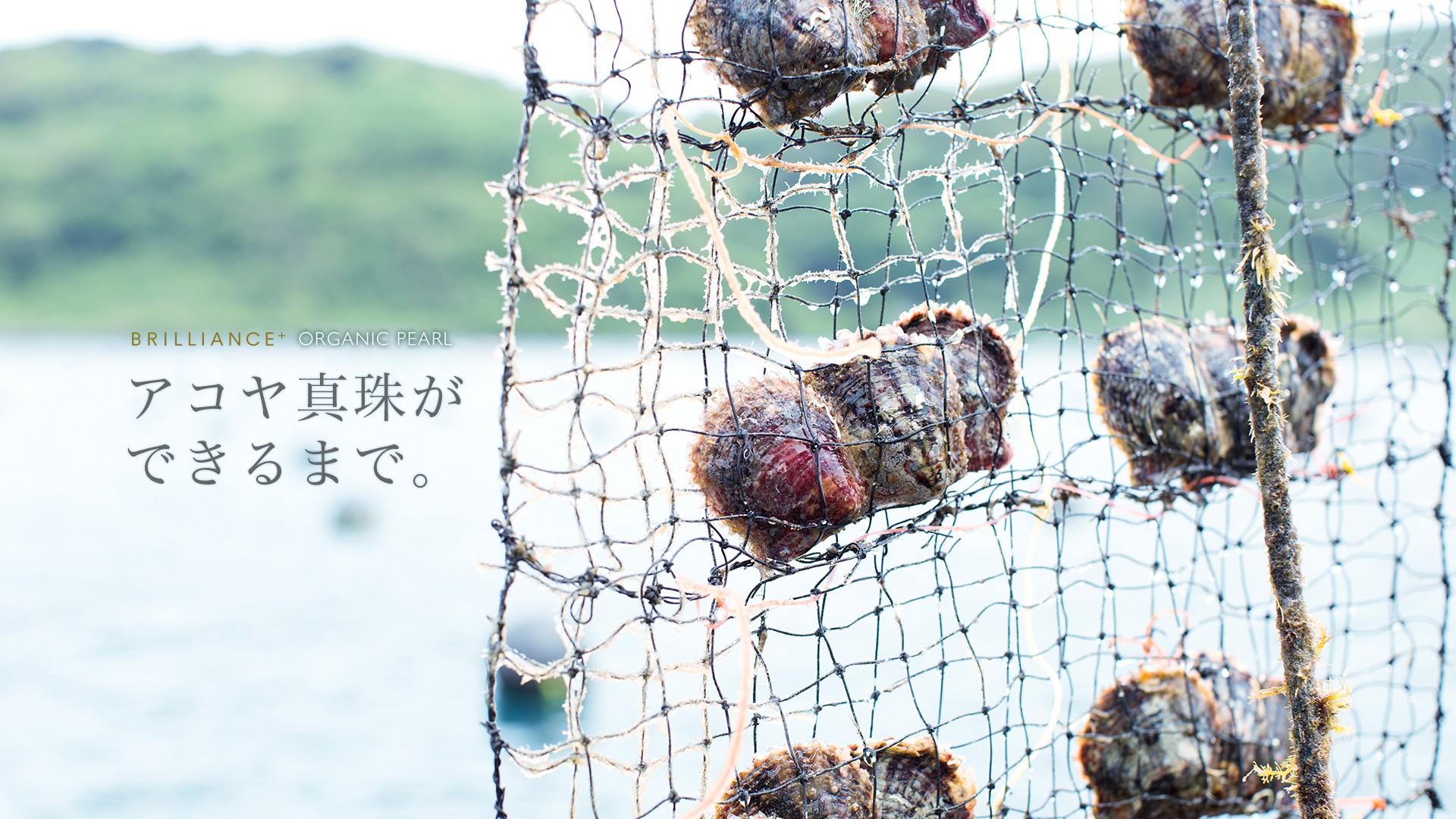 アコヤ真珠は日本の美しい海で大切に育てられています