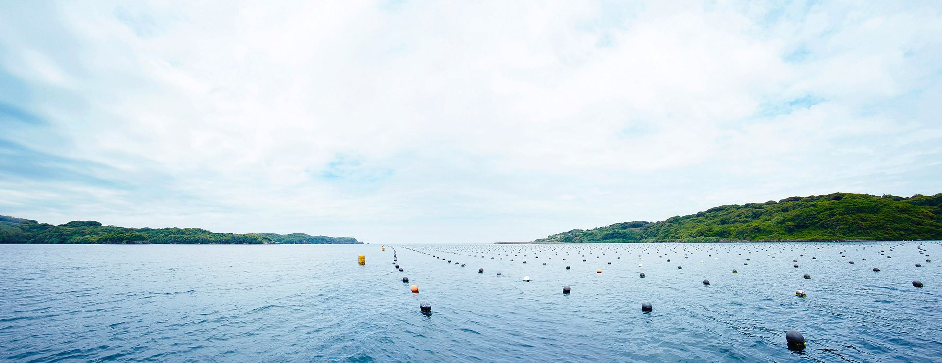 アコヤ真珠が養殖されている湾