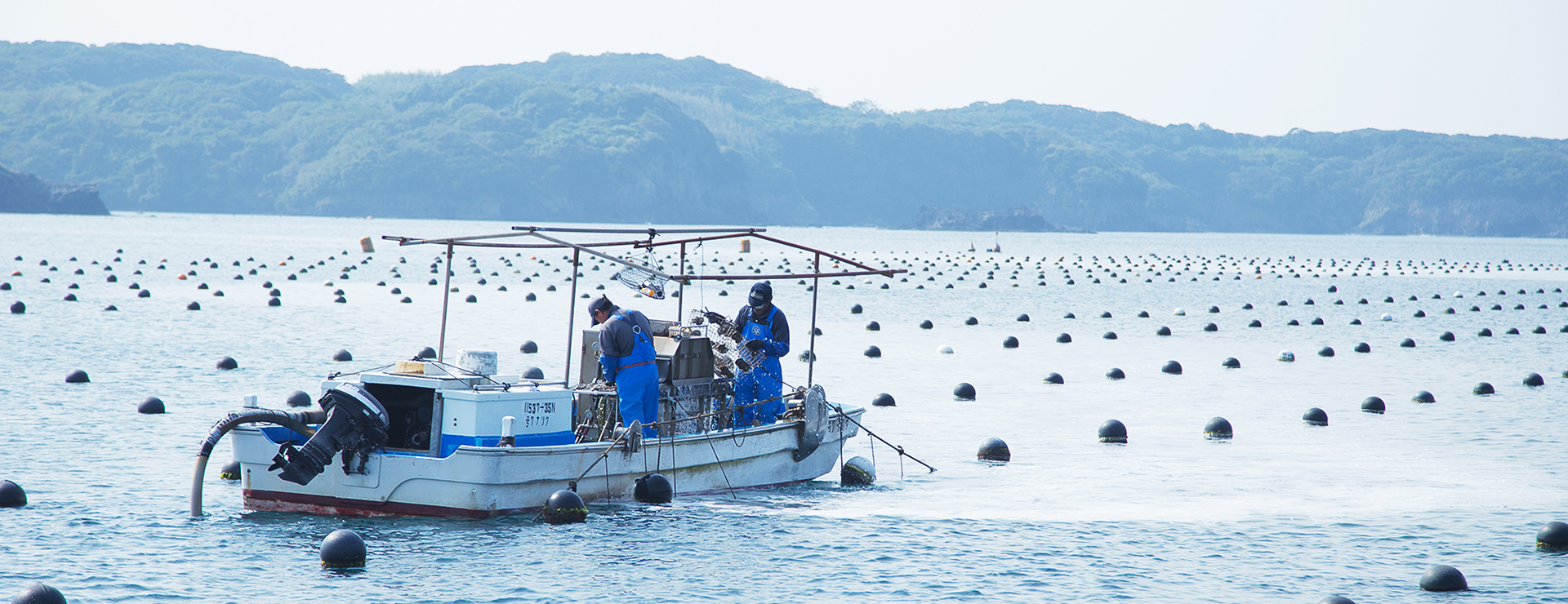 アコヤ貝を沖に出す
