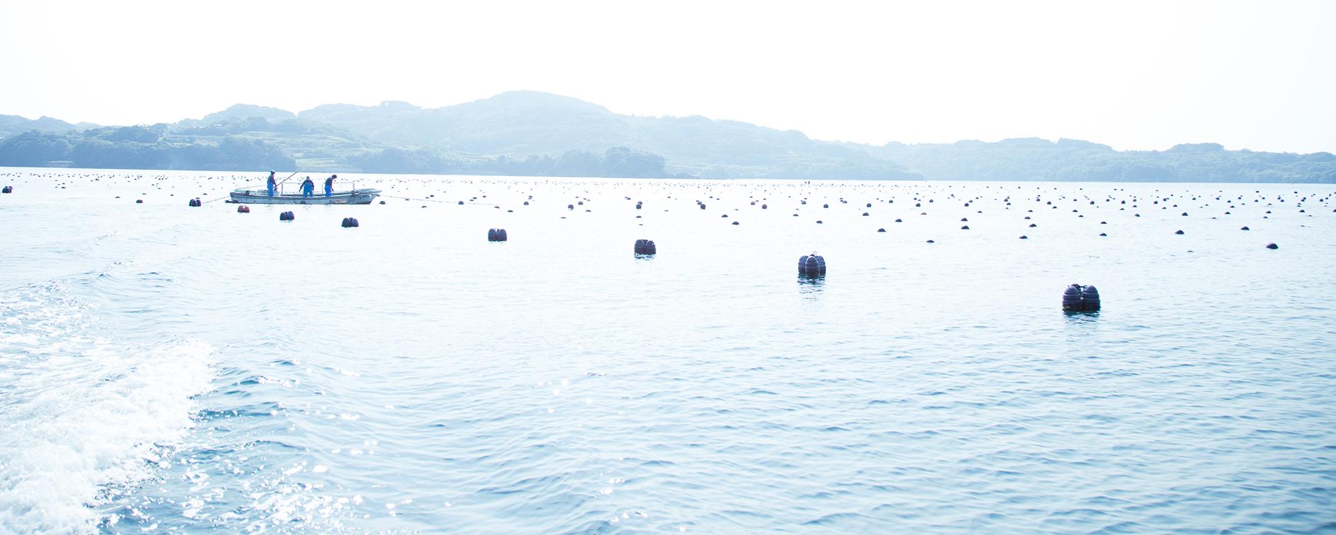 アコヤ真珠が生まれる海